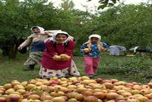 زنان ایران عمدتا از لحاظ اقتصادی غیرفعالند
