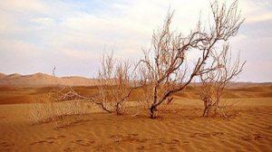 بحران زیست محیطی در زنجان: ۲۰ درصد از مساحت استان در معرض بیابانی شدن
