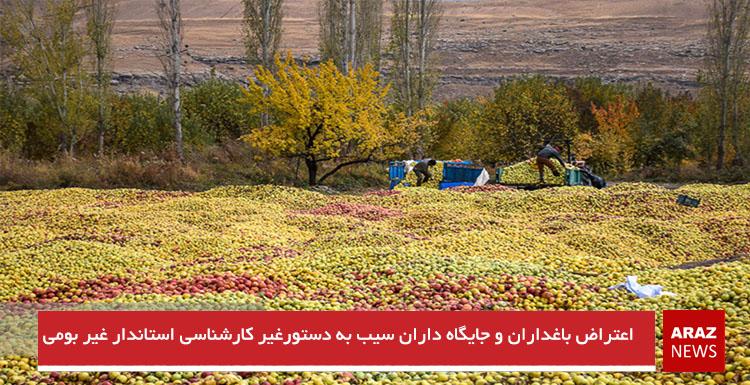 اعتراض باغداران و جایگاه داران سیب به دستور غیر کارشناسی استاندار غیربومی