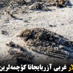کؤچری قوشلار غربی آزربایجانا کؤچمهلرین باشلادیلار