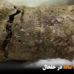 کشف جام ۳۰۰۰ ساله در خلخال