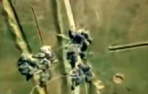ضربه سنگین ارتش آزربایجان به ارتش ارمنستان + ویدئو