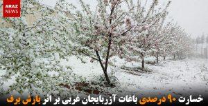 خسارت ۹۰ درصدی باغات آزربایجان غربی بر اثر بارش برف