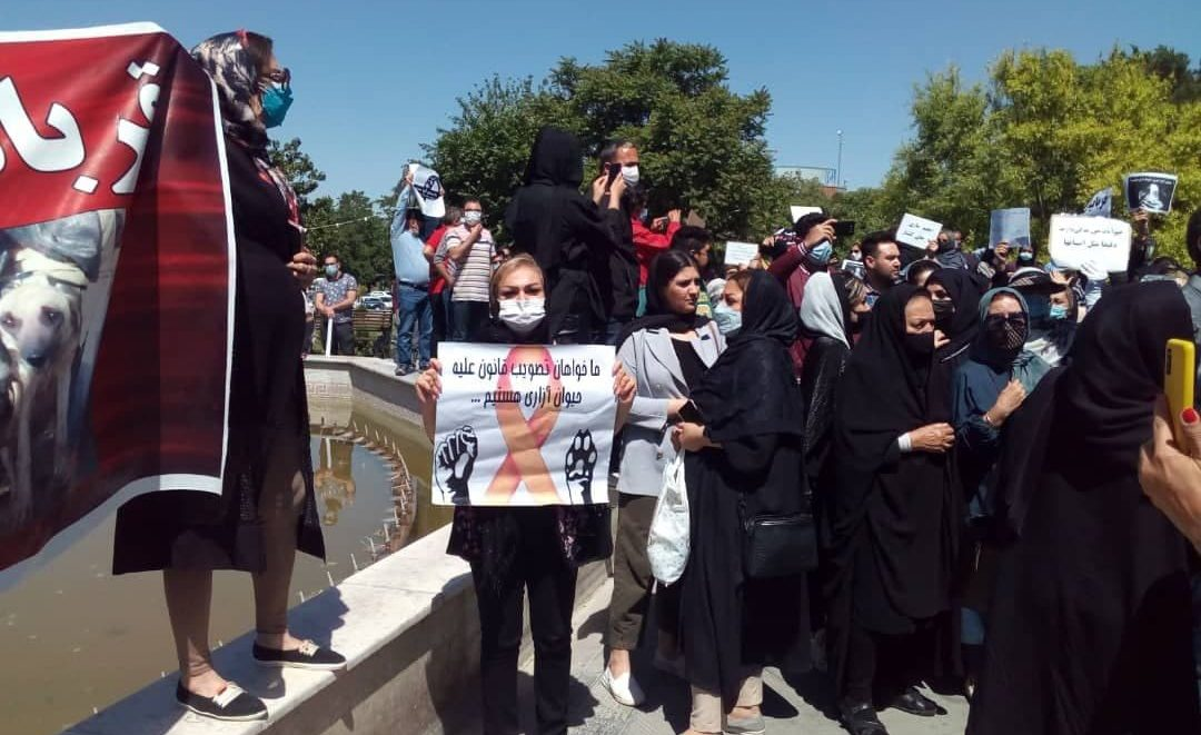 اعتراض شهروندان تبریز به کشتار سگهای ولگرد مسئولین را مجبور به پاسخگویی کرد